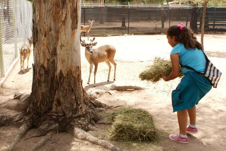Habrá curso de verano en el Zoológico Sahuatoba