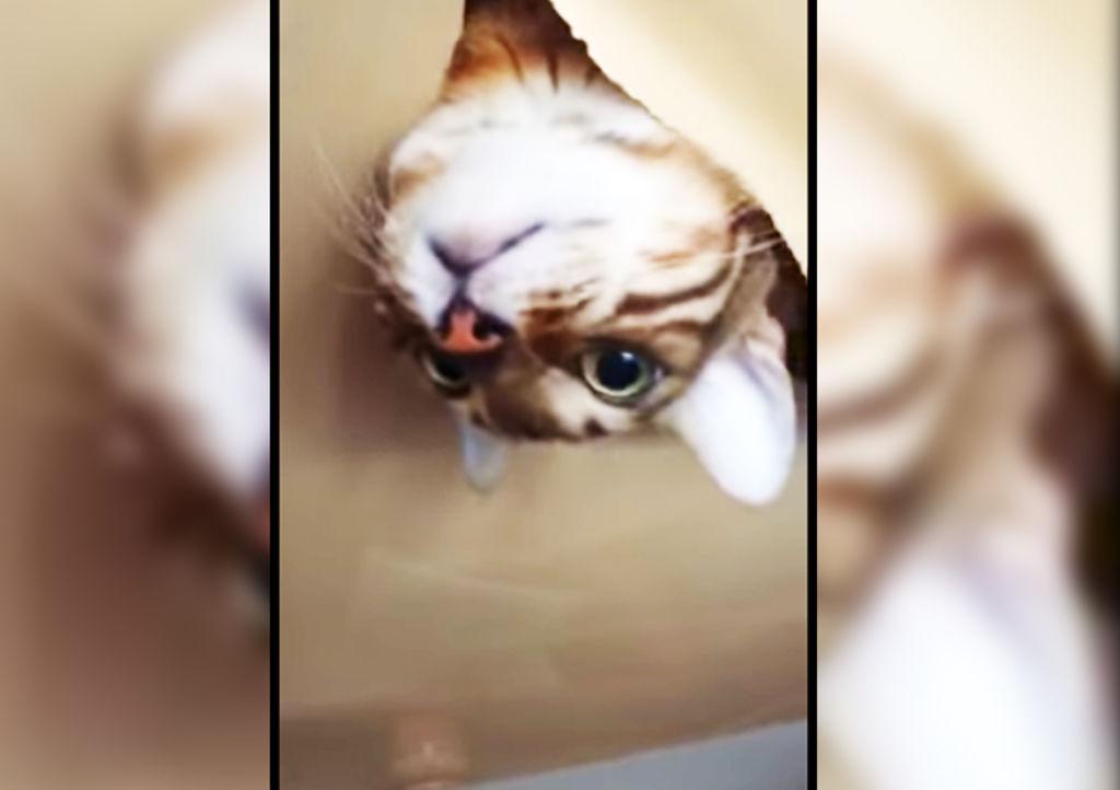 Dej a su gato en casa y esto fue lo que ocurri - El gato en casa ...
