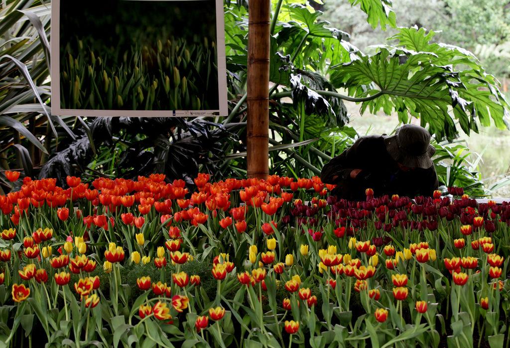 Plantas carn voras colmar n el jard n bot nico de bogot for Jardin botanico bogota nocturno 2016