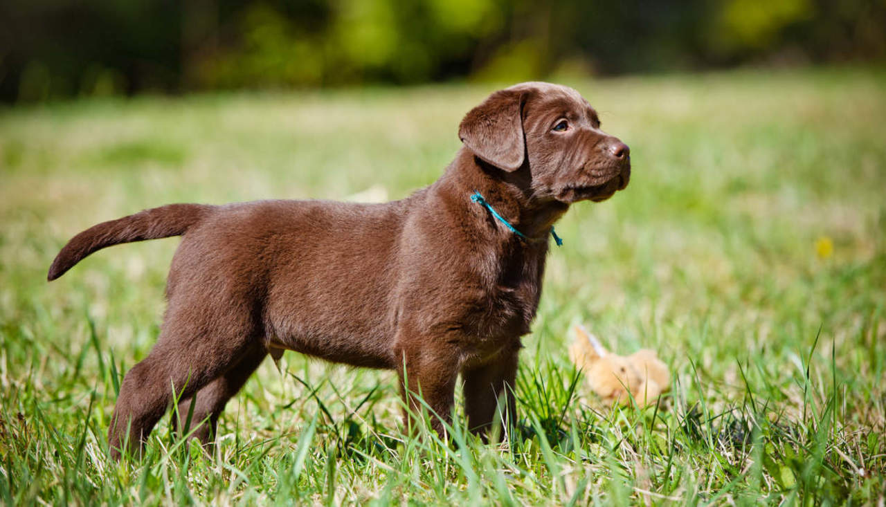 Small Breed Dogs Good For Elderly