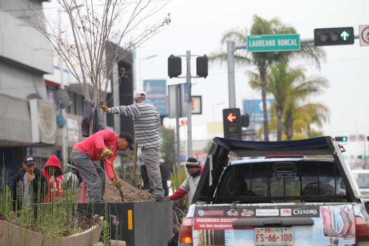 Se quemaron 70 de plantas en vivero for Viveros en maldonado