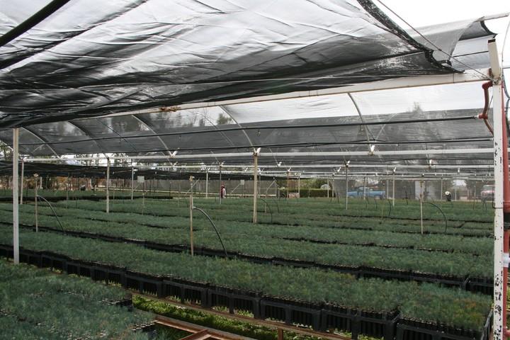 Heladas quemaron 15 mil plantas del vivero municipal for Viveros en maldonado