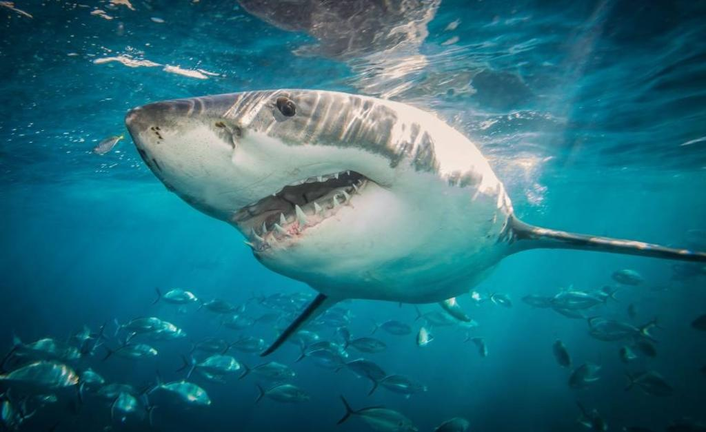 Adolescente muere tras ser atacado por un tiburón mientras practicaba surf
