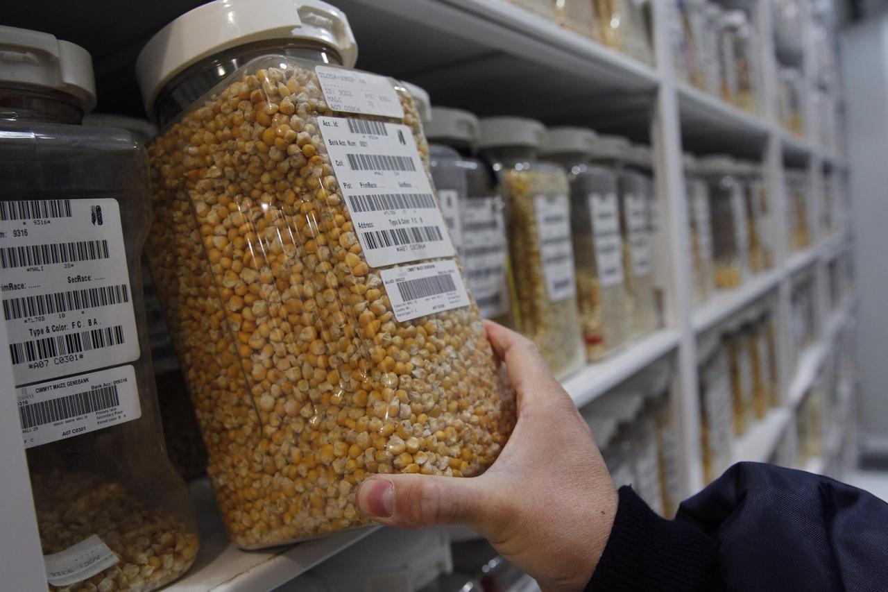 Van por el control de semillas en México