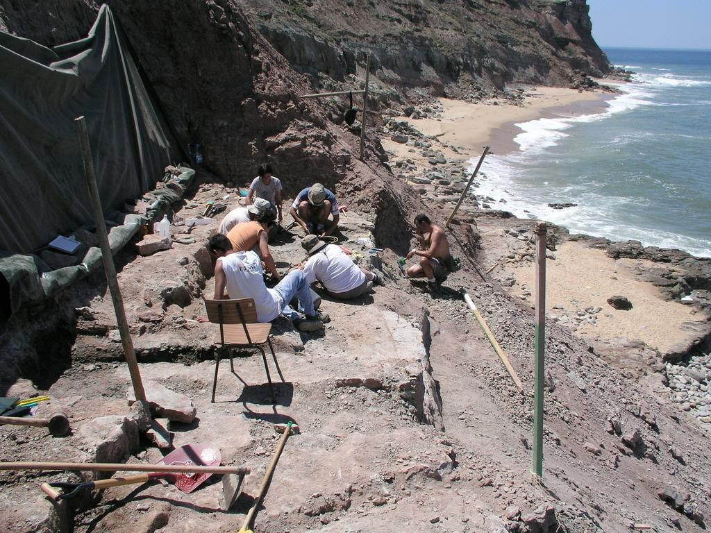 Hallan primeros rastros de carcarodontosaurios en el hemisferio norte