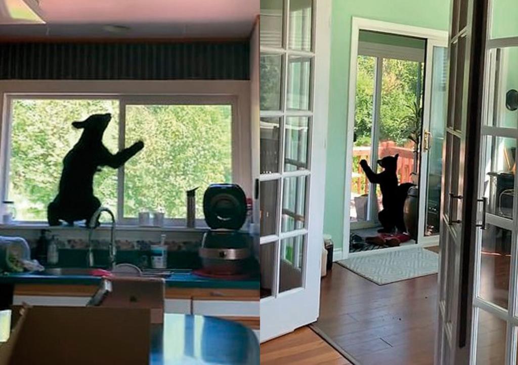 Mujer descubre a dos cachorros de oso explorando su cocina