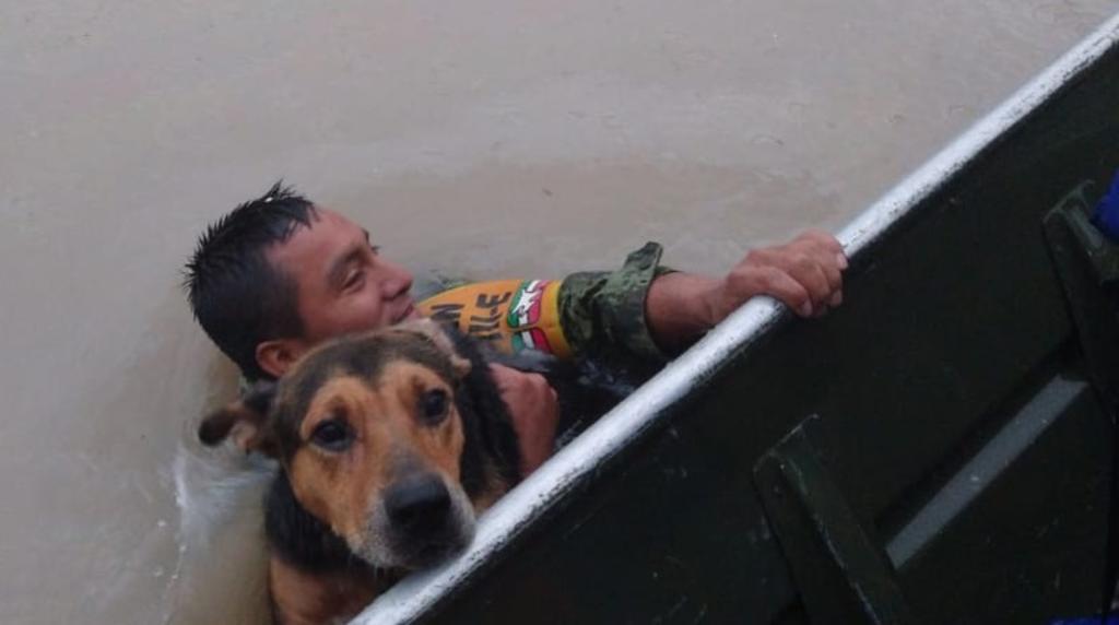 Militar rescata a perrito durante inundaciones en Tamaulipas y se vuelve viral