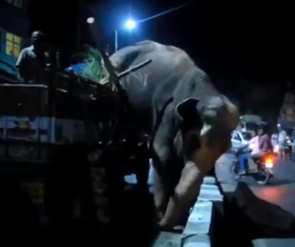 Elefante escapa del camión en el que era transportado y merodea por la ciudad