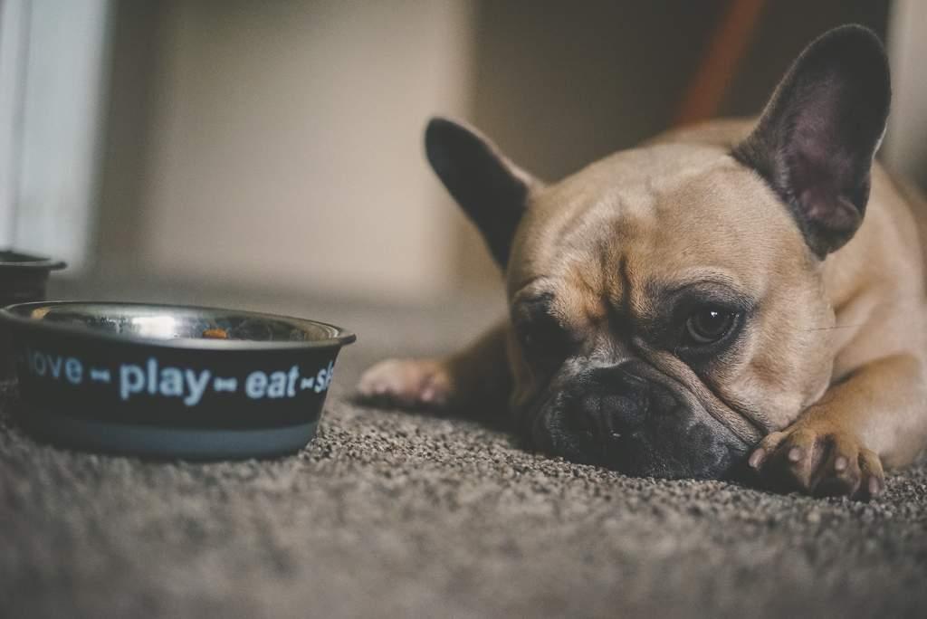 ¿Es bueno dar comida enlatada o de sobre a los perros?