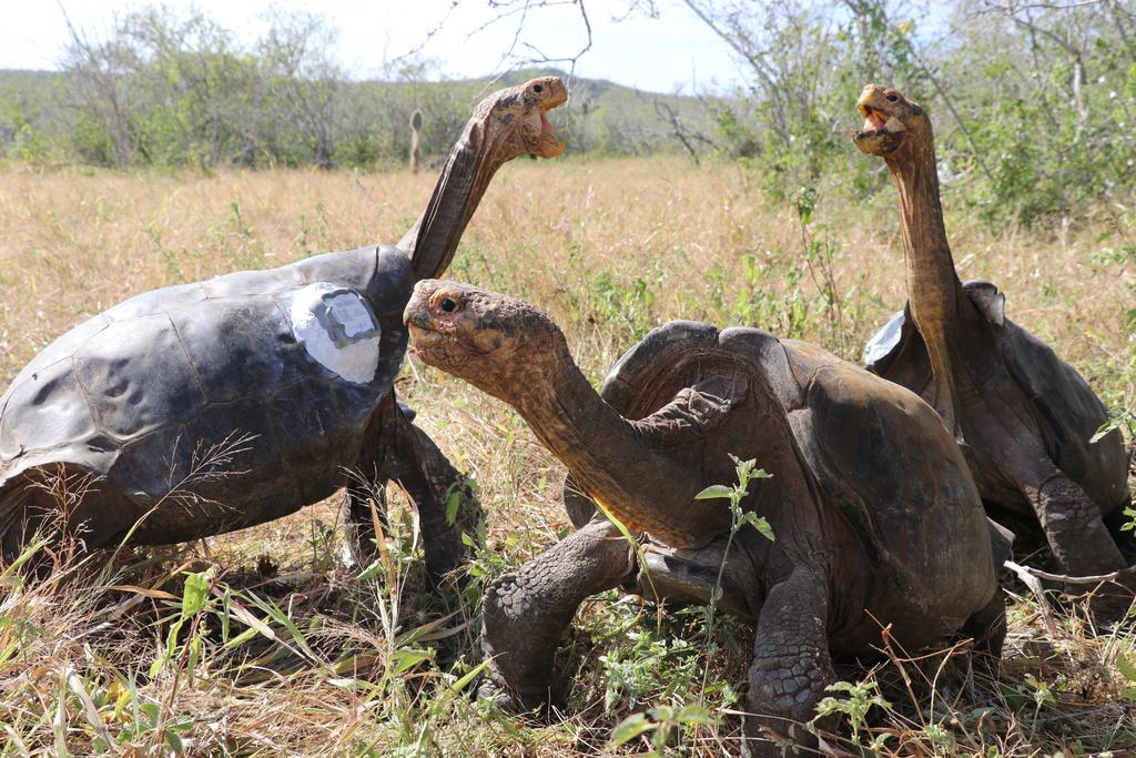 Proyecto de ciencia ciudadana catalogará biodiversidad en Galápagos
