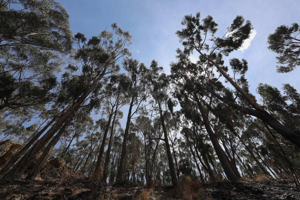 Árboles que crecen rápido mueren antes; ello agrava la crisis climática