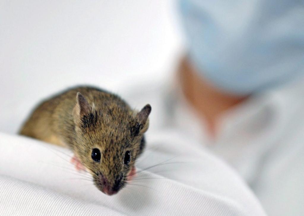 Logran investigadores importante regresión del cáncer de pulmón en ratones