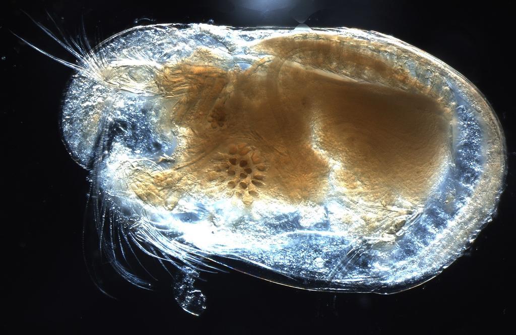 Descubren espermatozoides fosilizados de 100 millones de años