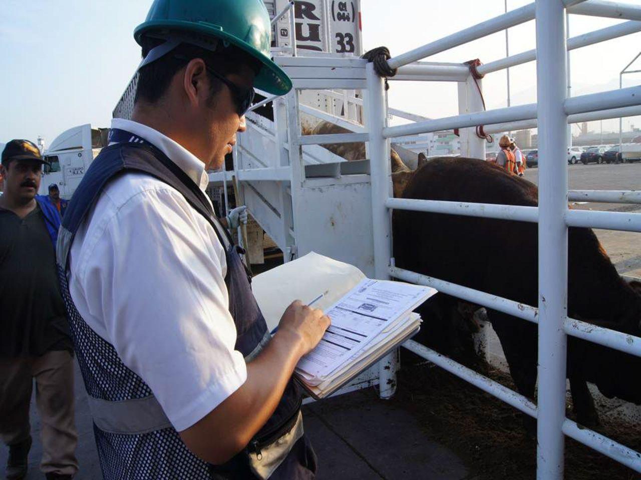 Crece exportación ganadera en Durango
