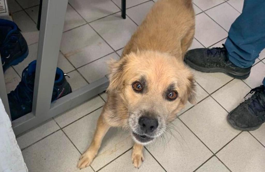 Agencia de autos en Cancún adopta a perro que se resguardó con ellos