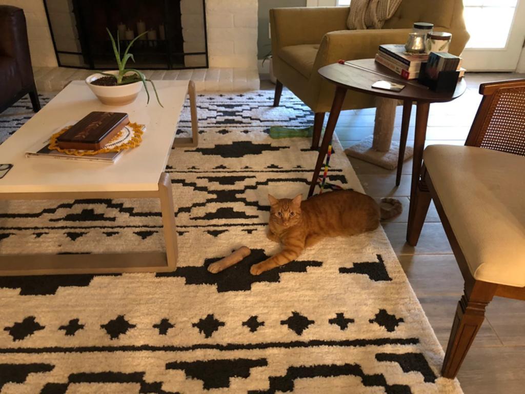 Ilusión óptica hace que parezca que gato tiene una pata cortada