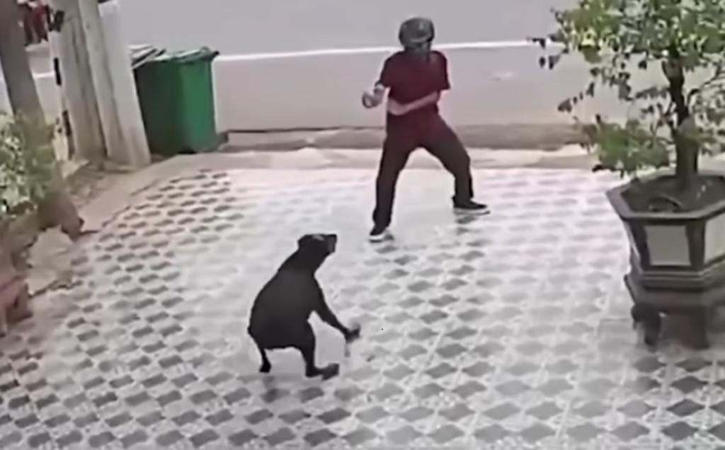 VIRAL: Al estilo de Karate Kid, hombre se defiende del ataque de perros