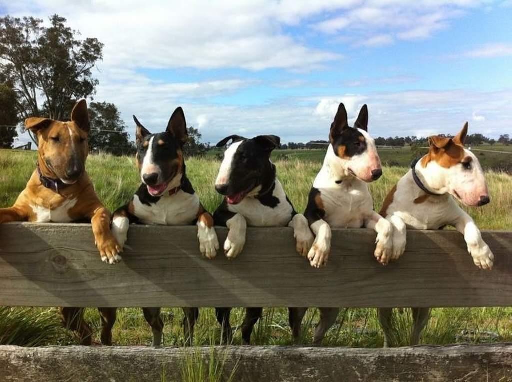 Perros de piel sensible, quiénes son y cómo cuidar de ellos