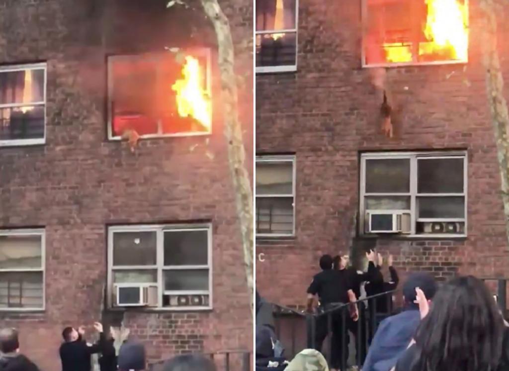 Gato brinca de un edificio para salvarse de un incendio