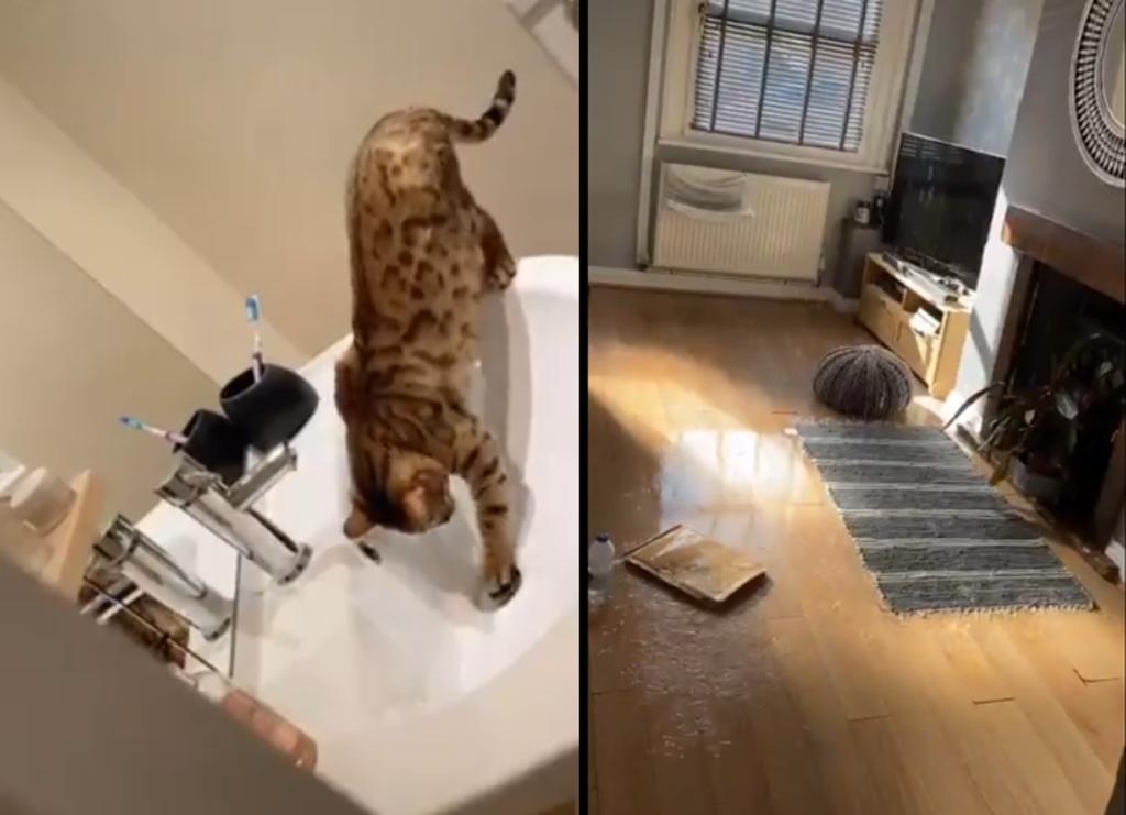 Mascota inunda 'sin remordimientos' la casa de su dueña