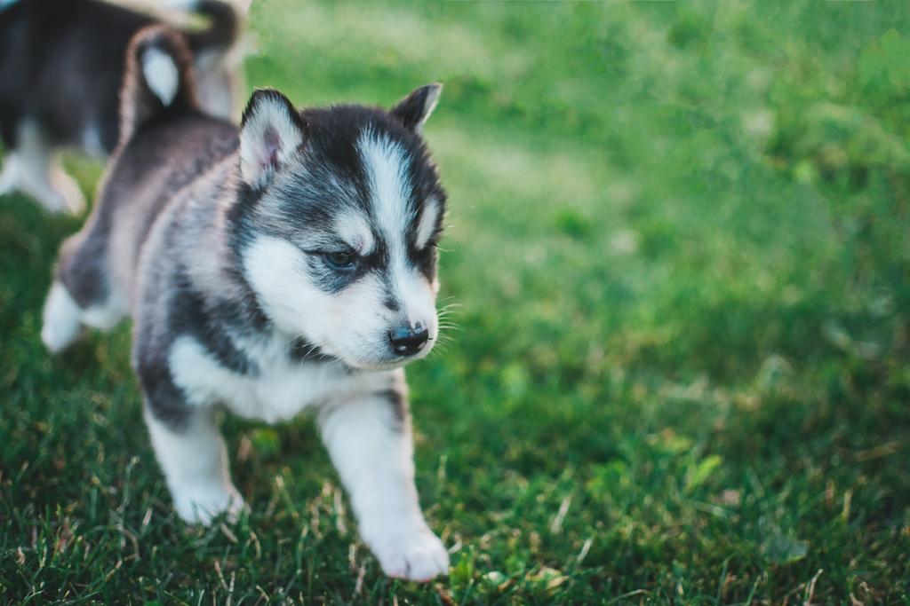 ¿Cuáles son las vacunas obligatorias para tu mascota?