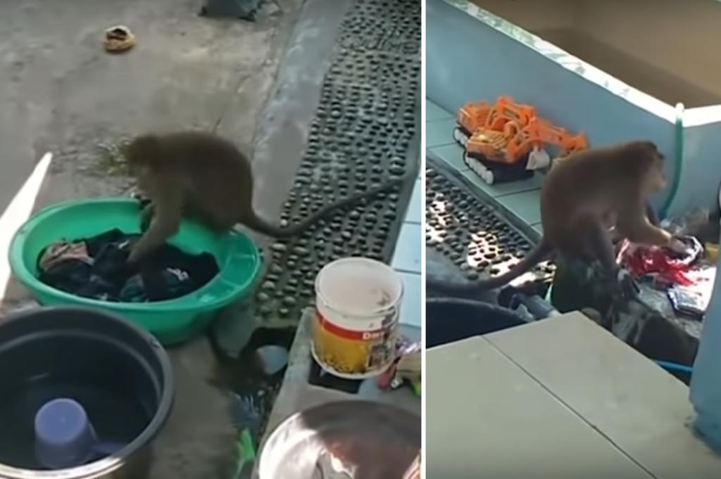 Mono salvaje 'ayuda' a una mujer a lavar la ropa
