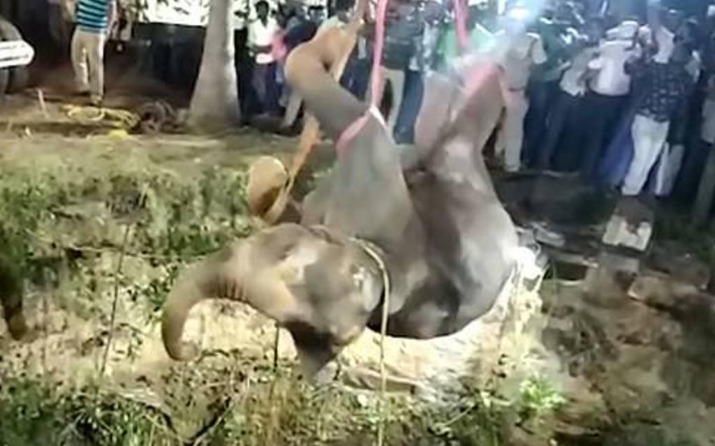 Rescatan a joven elefante que cayó a un pozo de 15 metros de profundidad