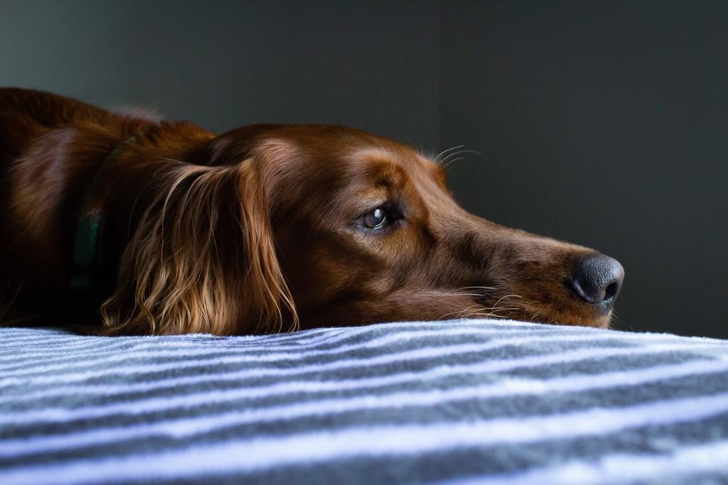 ¿Qué cambios hacer en la alimentación de un perro con cáncer?