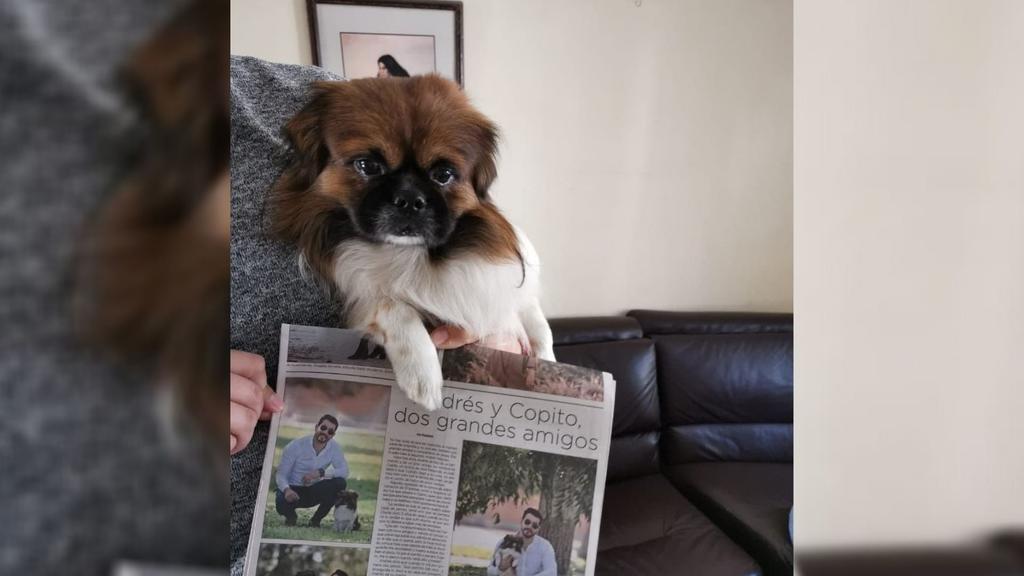 El perro Copito es fanático de El Siglo de Torreón