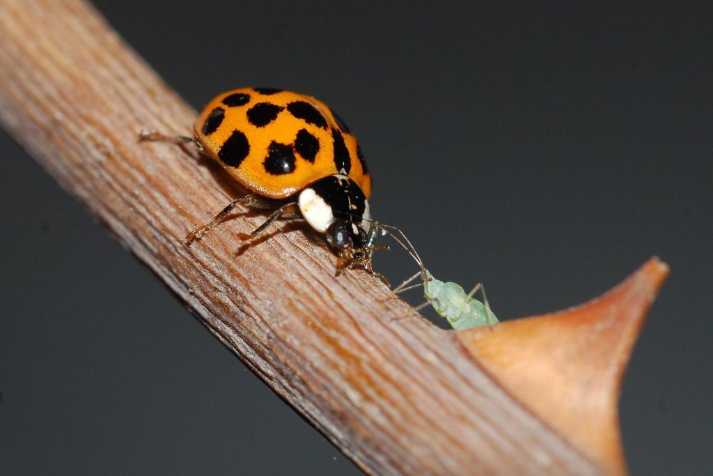 Deploran científicos disminución en población de insectos