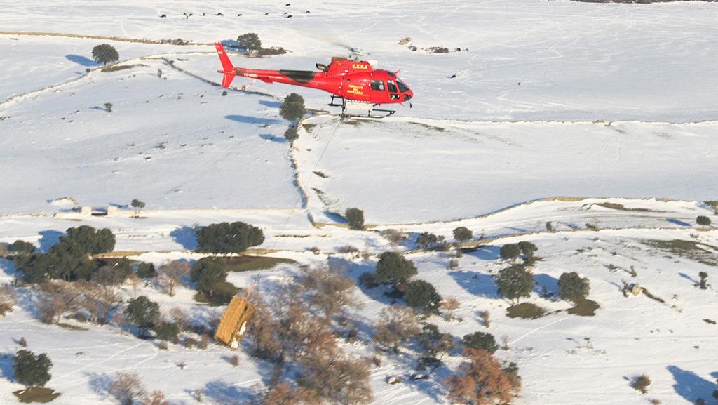 Alimentan por helicóptero a animales que quedaron aislados por la nevada en Madrid