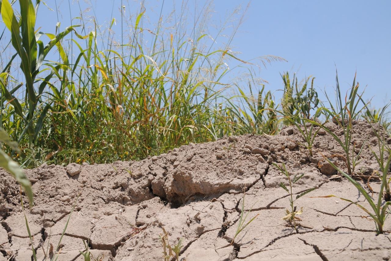 Estiman 60 mdp en daños por sequía en Durango