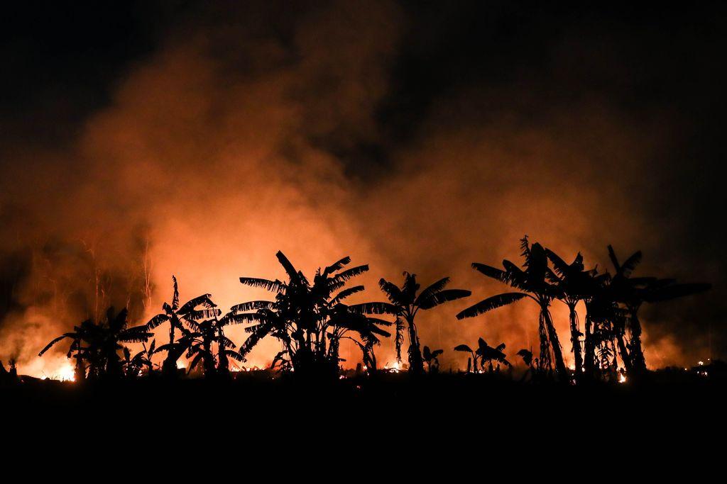Concluirán protección militar de Amazonía