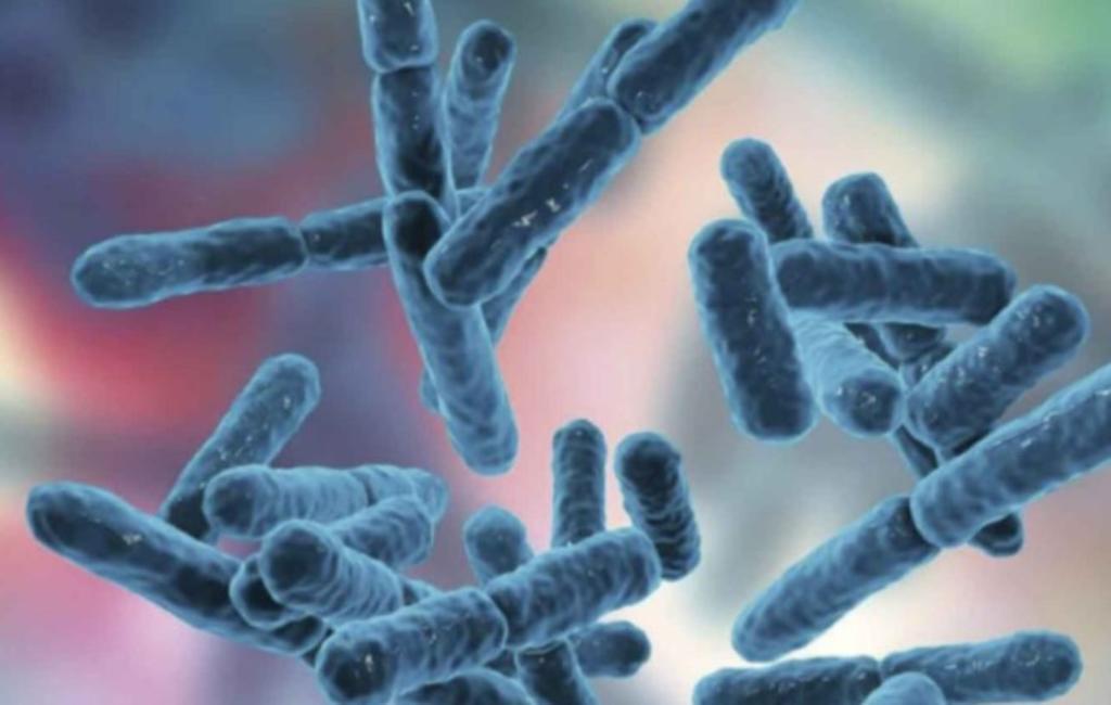¿Qué son los probióticos y por qué debo consumirlos?