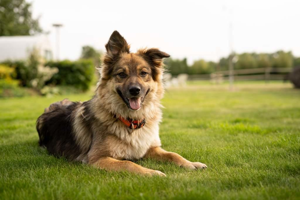 Desarrollan dispositivo que detecte enfermedades por el olor como los perros