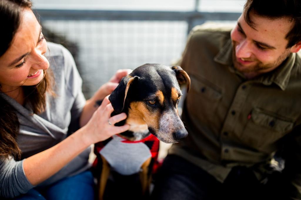 Reduce el estrés acariciando a tu mascota