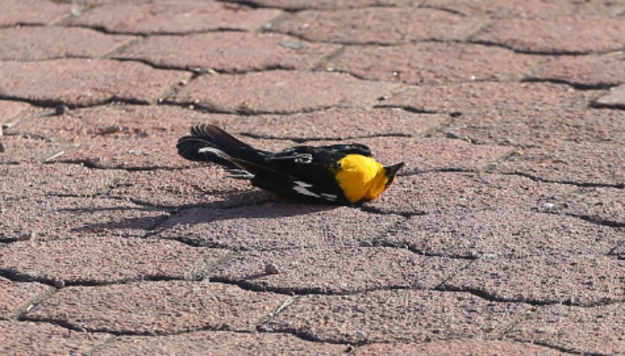 Aves pudieron morir a causa de fumigaciones