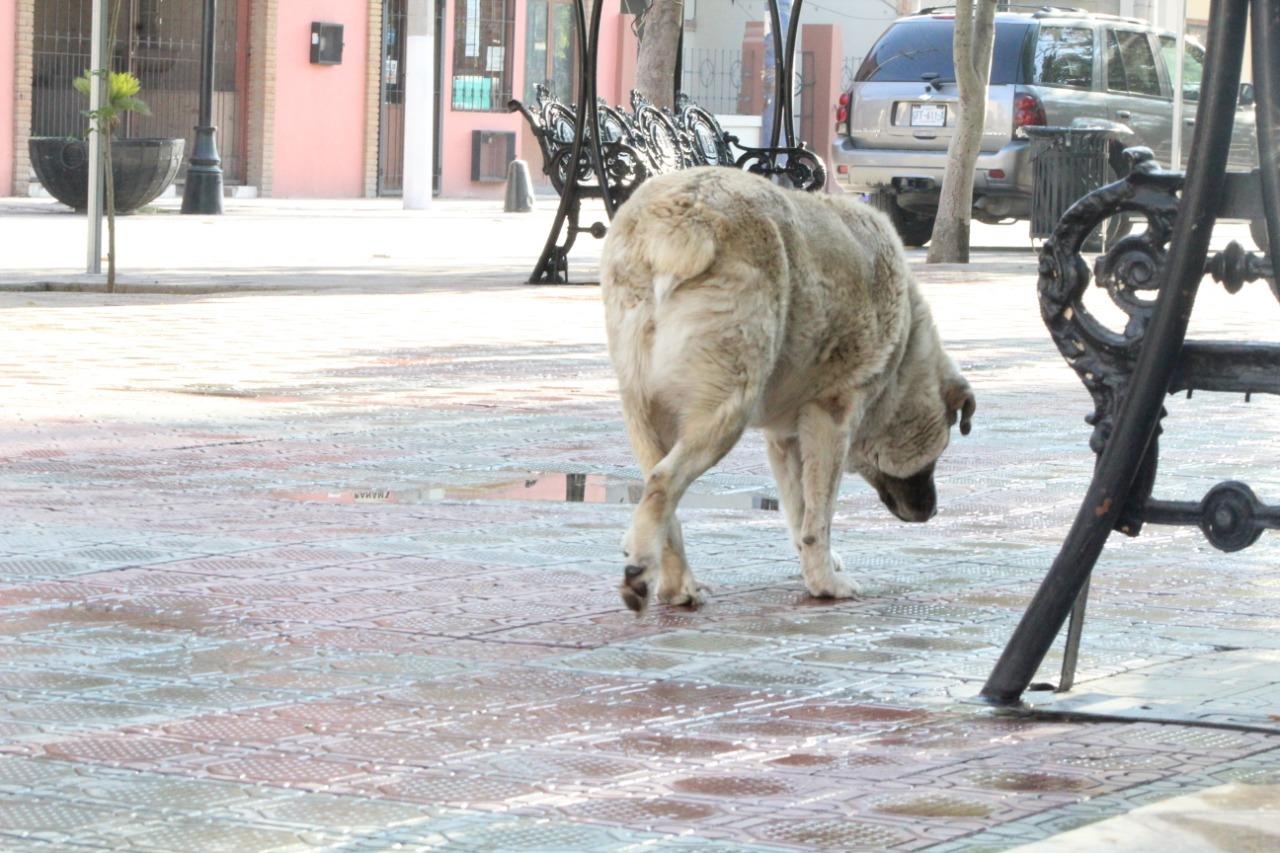 Alerta por abandono de animales en Lerdo