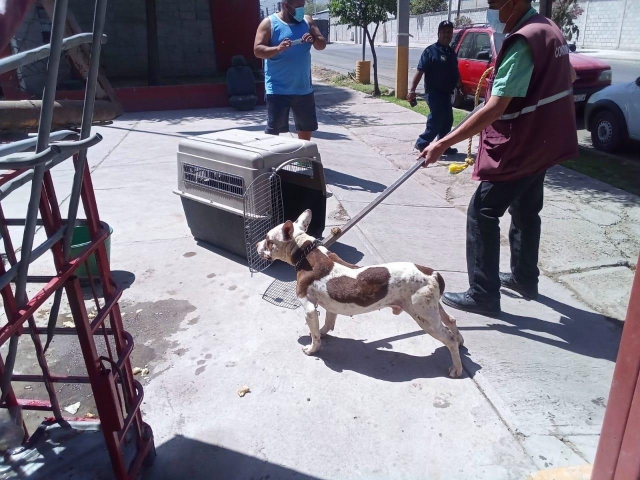 Resguardan a perro que agredió a mujer