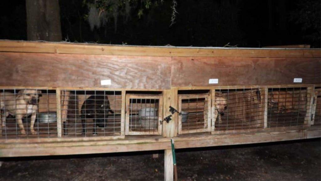 Rescatan en EUA a 42 perros utilizados para peleas ilegales