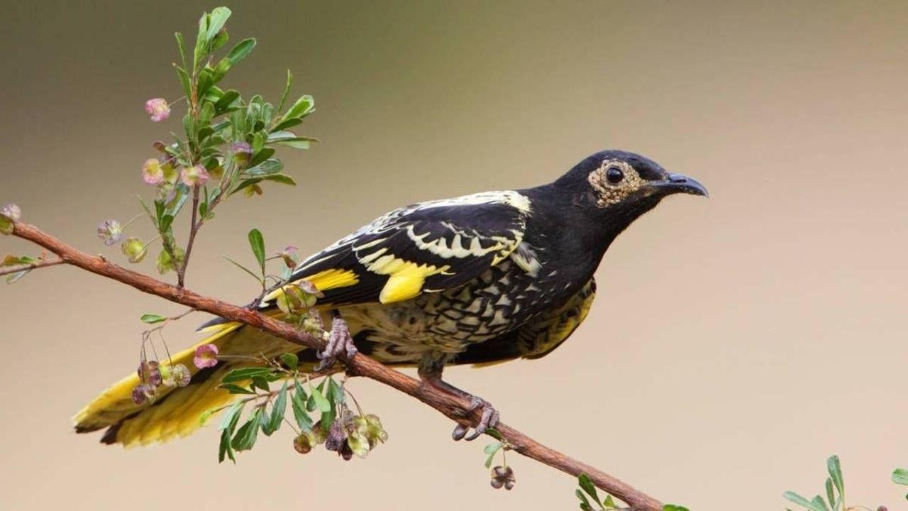 Pájaro se olvida de cantar