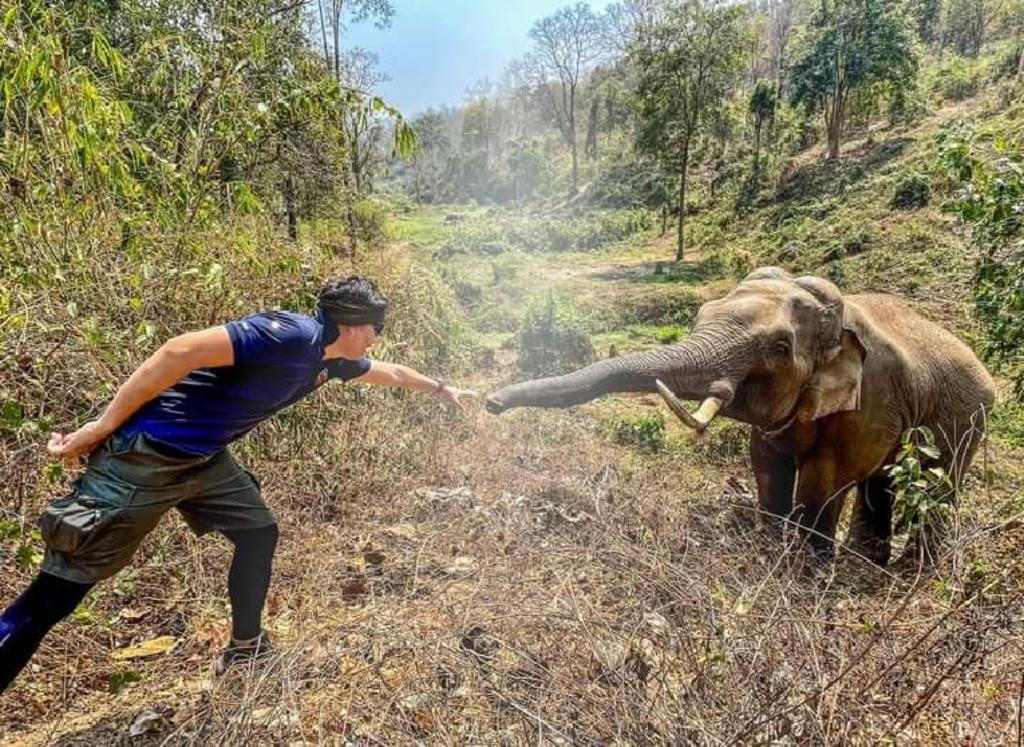 Emotivo momento en que elefante se reencuentra con veterinario que lo salvó