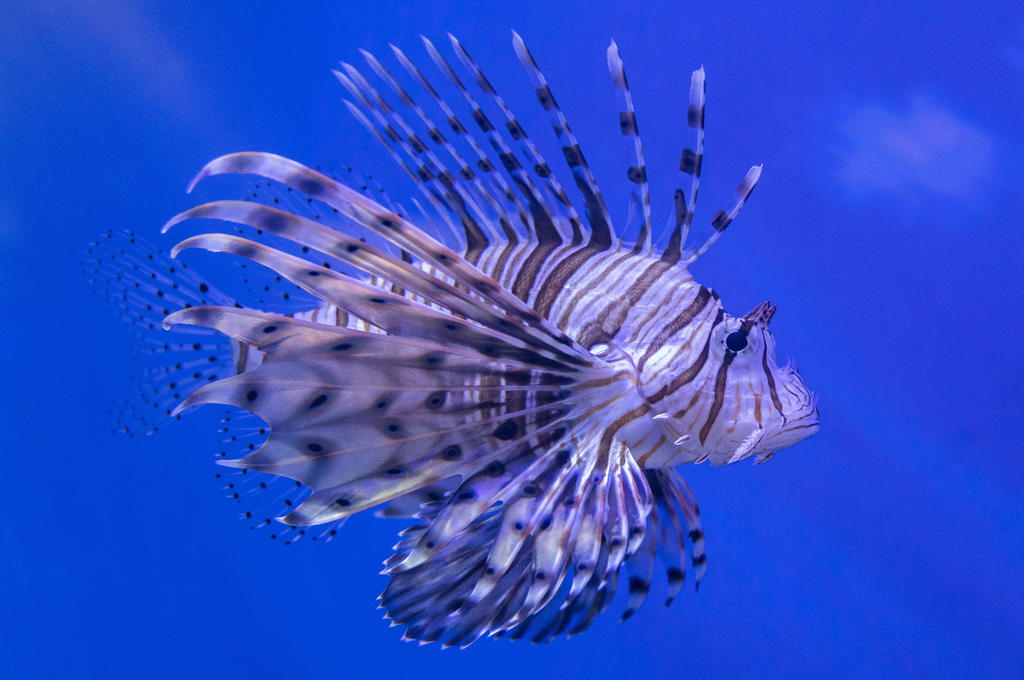 Piden más protección de océanos en favor del clima y biodiversidad