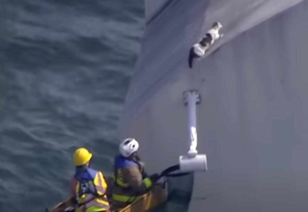 Gato 'atrapado' en un puente escapa tras ser asustado por sus rescatistas