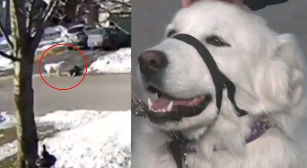 Perro salva a su dueña detenido el tráfico; la mujer se había desmayado
