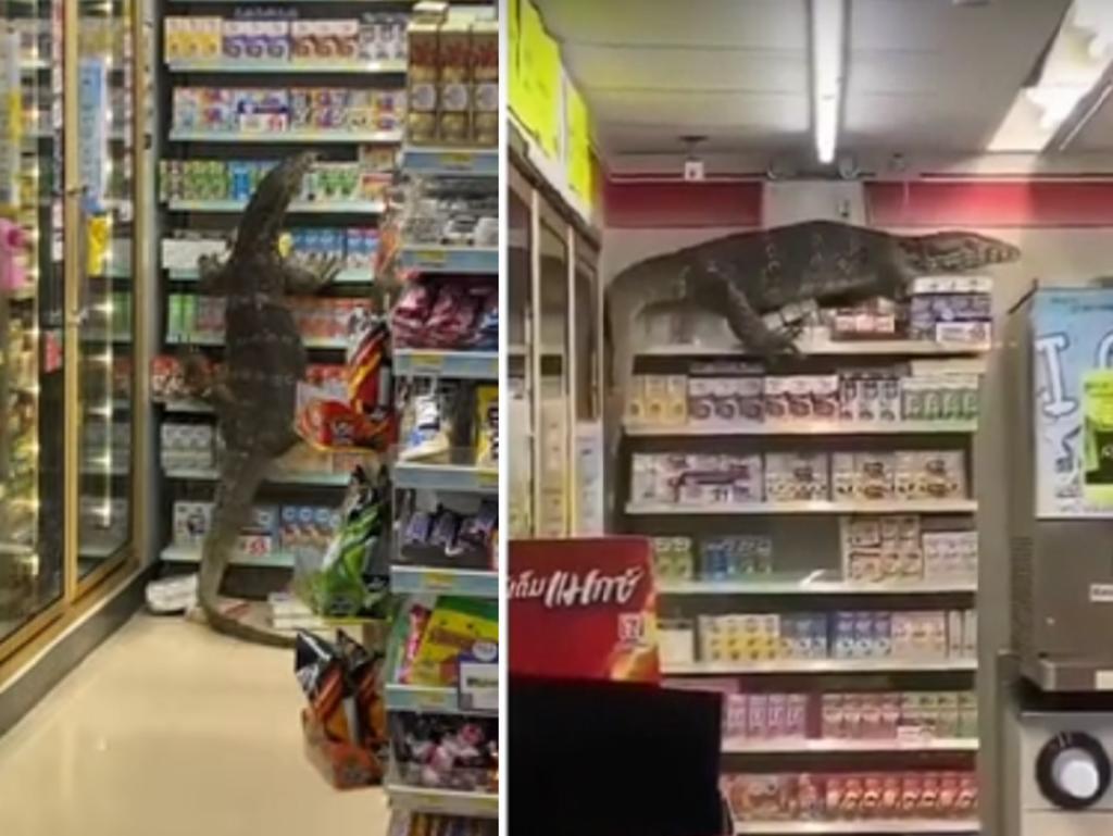 Lagarto causa destrozos en una tienda y se hace viral