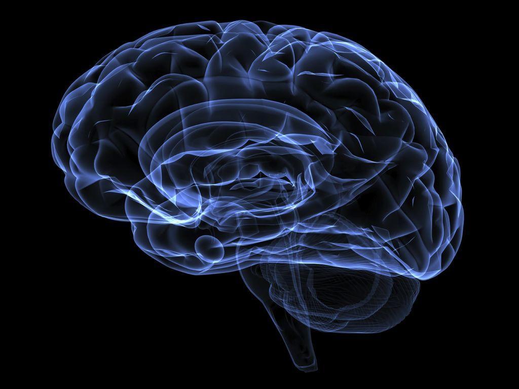 Cerebro humano moderno evolucionó en África hace unos 1.7 millones de años