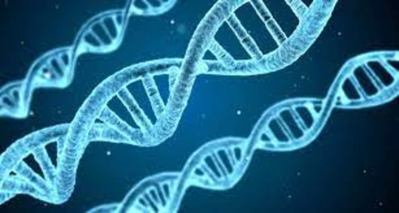 Mezcla genética de poblaciones del Pacífico Sur contribuyó a su adaptación