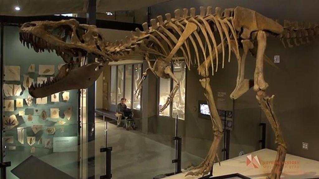 ¿Cuántos Tiranosaurios rex hubo?