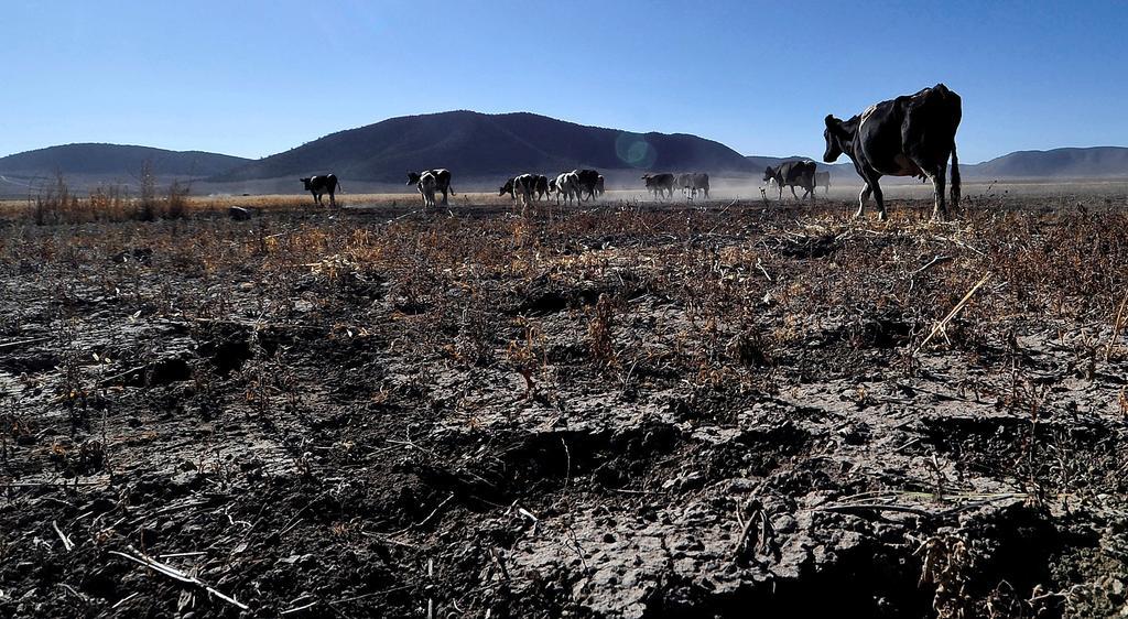 Se agudiza sequía en México; afecta a 84 por ciento del país